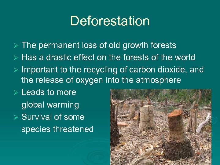 Deforestation The permanent loss of old growth forests Ø Has a drastic effect on