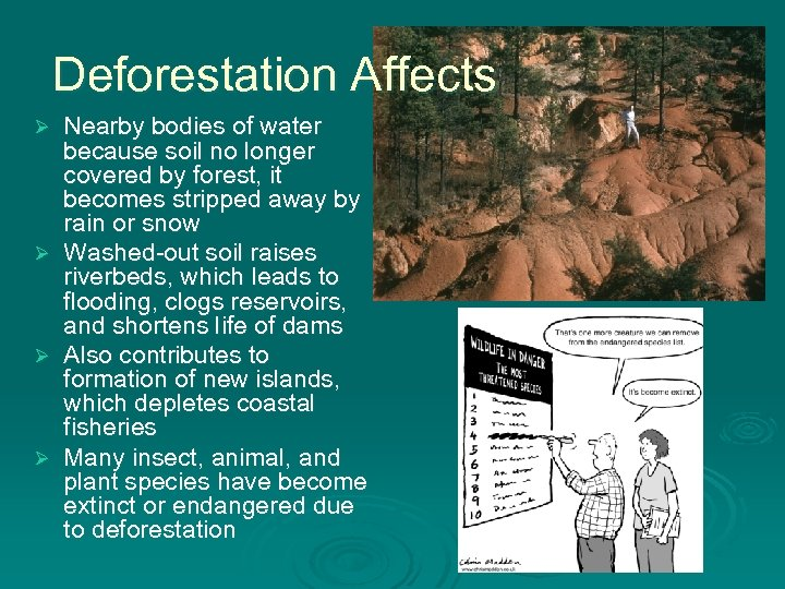Deforestation Affects Ø Ø Nearby bodies of water because soil no longer covered by