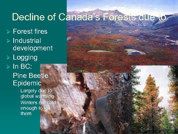 Decline of Canada's Forests due to Forest fires Ø Industrial development Ø Logging Ø