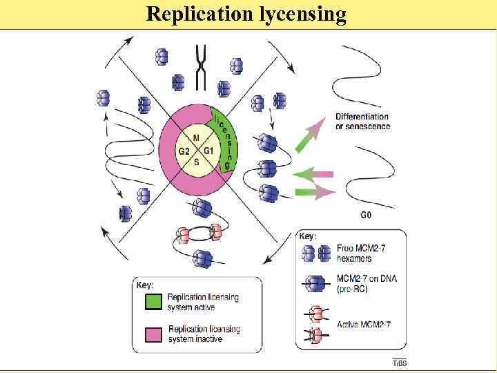 Replication lycensing