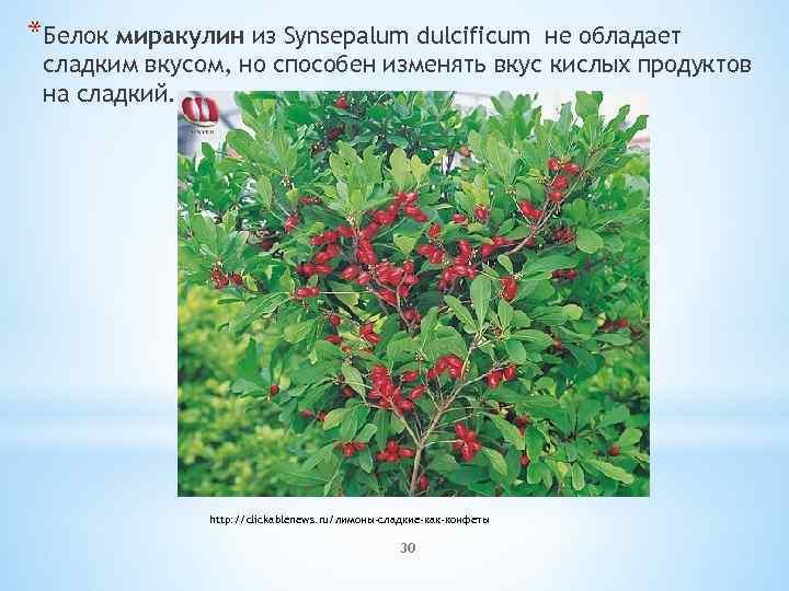 *Белок миракулин из Synsepalum dulcificum не обладает сладким вкусом, но способен изменять вкус кислых
