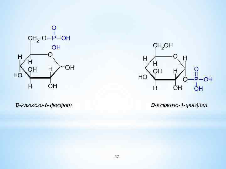 D-глюкозо-6 -фосфат D-глюкозо-1 -фосфат 37