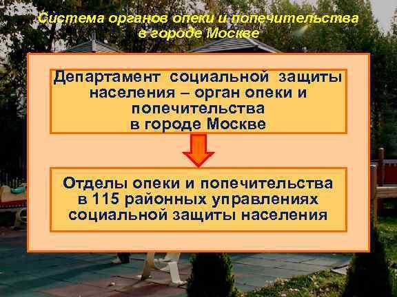 Система органов опеки и попечительства в городе Москве Департамент социальной защиты населения – орган