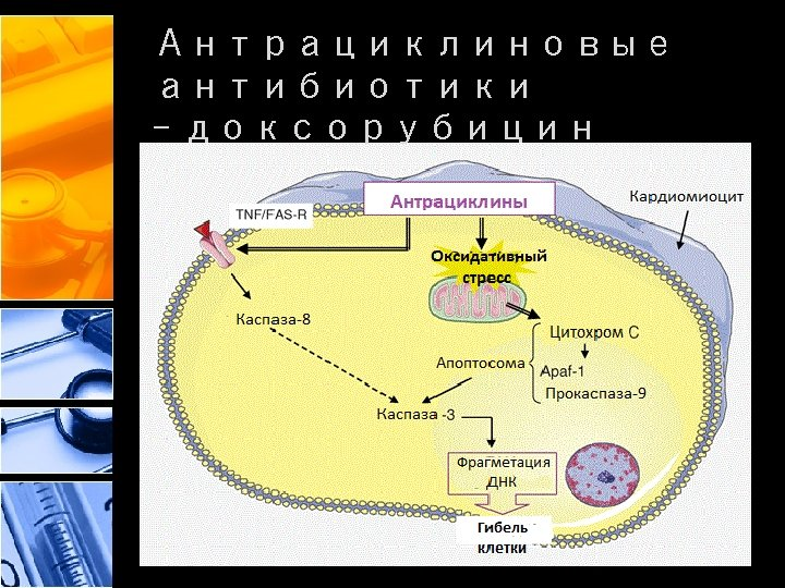Антрациклиновые антибиотики - доксорубицин