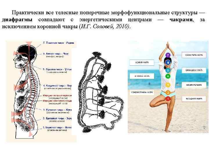 Практически все телесные поперечные морфофункциональные структуры — диафрагмы совпадают с энергетическими центрами —