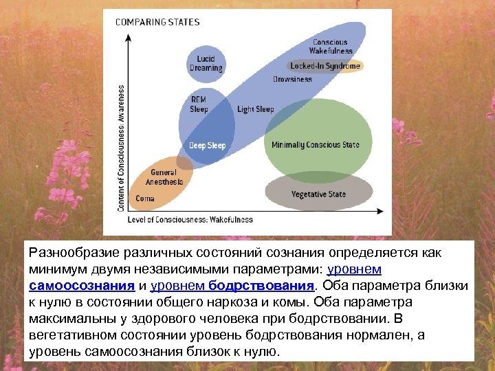 Разнообразие различных состояний сознания определяется как минимум двумя независимыми параметрами: уровнем самоосознания и уровнем
