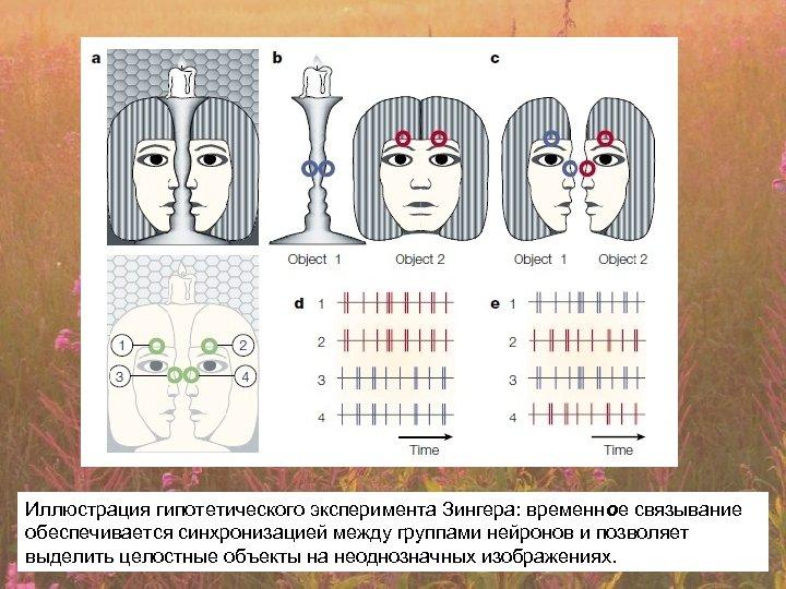 Иллюстрация гипотетического эксперимента Зингера: временное связывание обеспечивается синхронизацией между группами нейронов и позволяет выделить