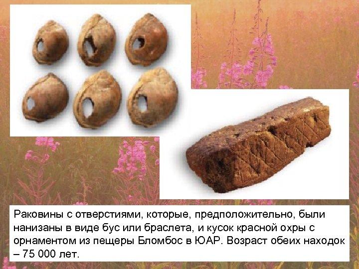 Раковины с отверстиями, которые, предположительно, были нанизаны в виде бус или браслета, и кусок
