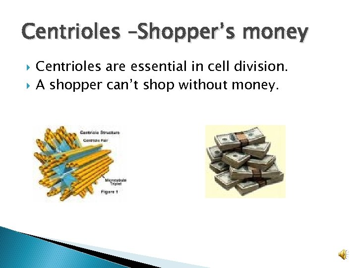 Centrioles –Shopper's money Centrioles are essential in cell division. A shopper can't shop without
