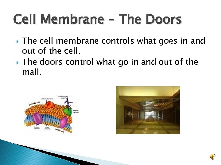 Cell Membrane – The Doors The cell membrane controls what goes in and out