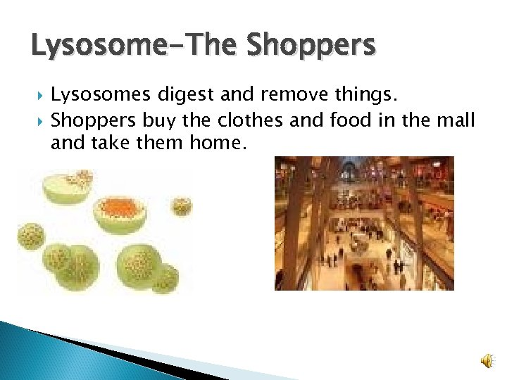 Lysosome-The Shoppers Lysosomes digest and remove things. Shoppers buy the clothes and food in