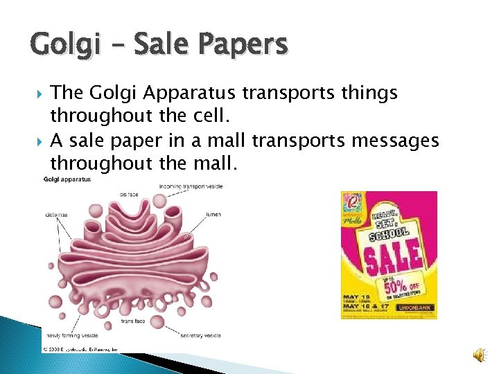 Golgi – Sale Papers The Golgi Apparatus transports things throughout the cell. A sale