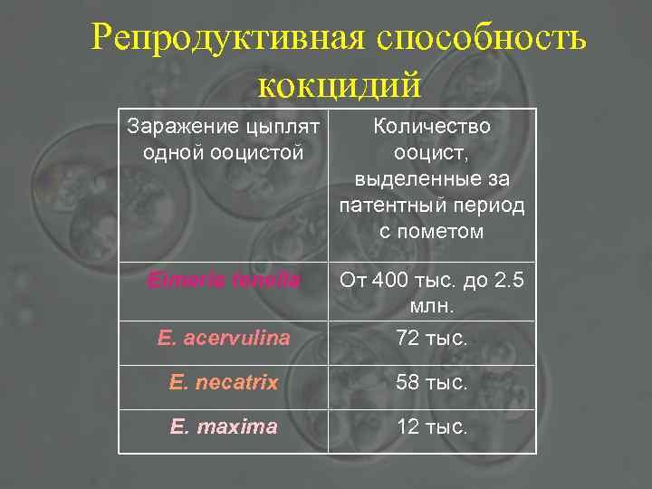 Репродуктивная способность кокцидий Заражение цыплят одной ооцистой Количество ооцист, выделенные за патентный период с