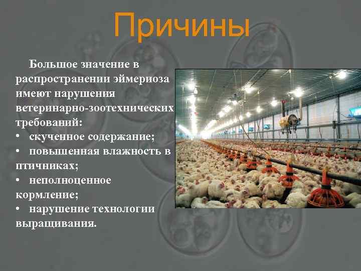 Причины Большое значение в распространении эймериоза имеют нарушения ветеринарно-зоотехнических требований: • скученное содержание; •