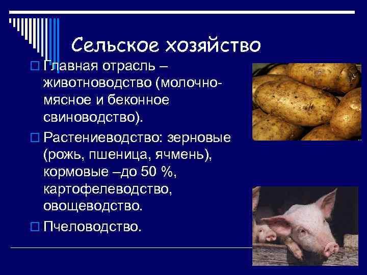 Сельское хозяйство o Главная отрасль – животноводство (молочномясное и беконное свиноводство). o Растениеводство: зерновые