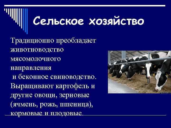 Сельское хозяйство Традиционно преобладает животноводство мясомолочного направления и беконное свиноводство. Выращивают картофель и другие