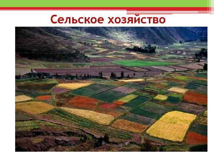Сельское хозяйство • Сельское хозяйство стран Латинской Америки представлено двумя секторами: 1) высокотоварное, в