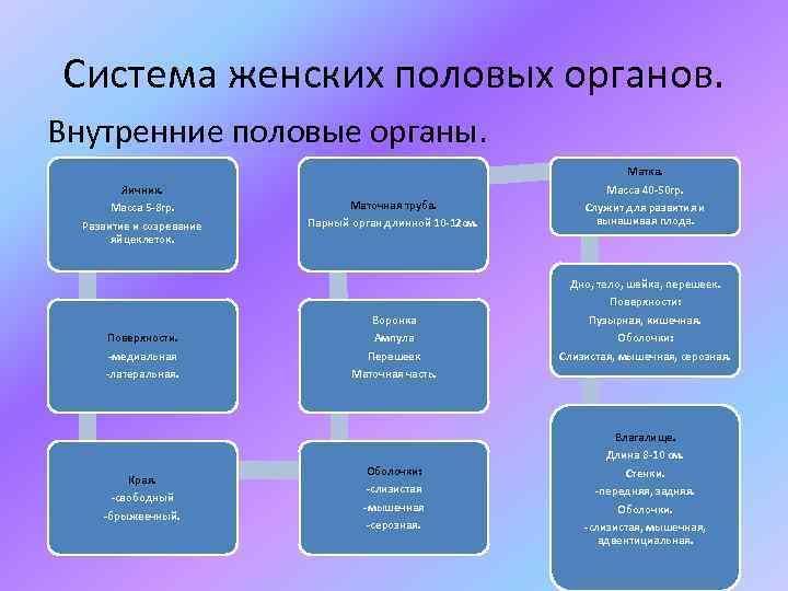Система женских половых органов. Внутренние половые органы. Яичник. Масса 5 -8 гр. Развитие и