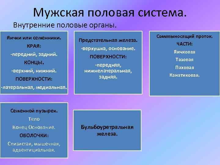 Мужская половая система. Внутренние половые органы. Яички или семенники. КРАЯ: -передний, задний. КОНЦЫ. -верхний,