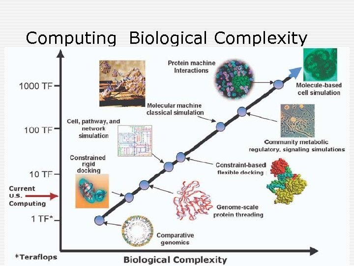 Computing Biological Complexity