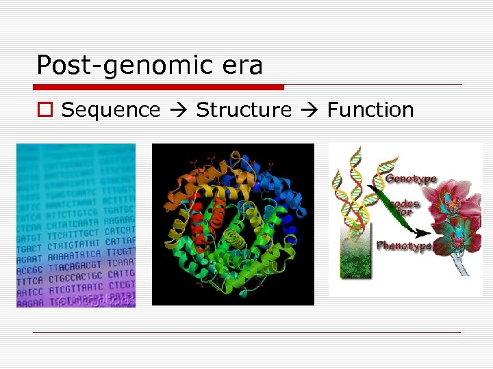 Post-genomic era o Sequence Structure Function