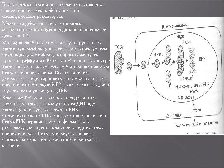Биологическая активность гормона проявляется только после взаимодействия его со специфическим рецептором. Механизм действия стероида