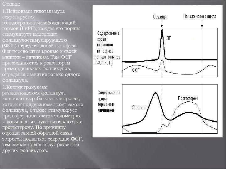 Стадии: 1. Нейронами гипоталамуса секретируется гонадотропинвысвобождающий гормон (Гн. РГ); каждая его порция стимулирует выделение