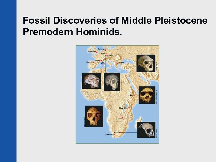 Fossil Discoveries of Middle Pleistocene Premodern Hominids.