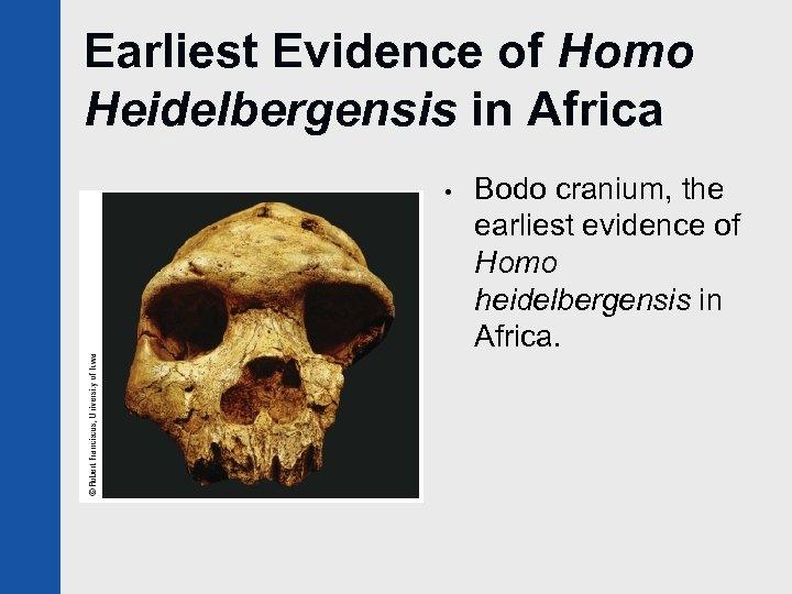 Earliest Evidence of Homo Heidelbergensis in Africa • Bodo cranium, the earliest evidence of