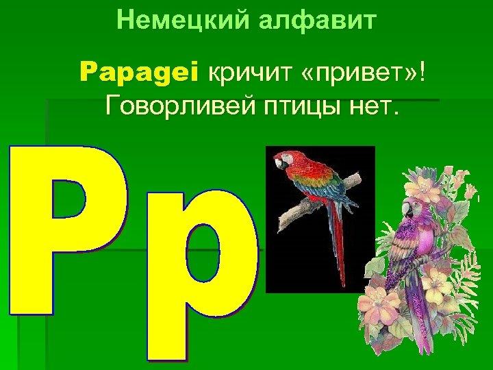 Немецкий алфавит Papagei кричит «привет» ! Говорливей птицы нет.