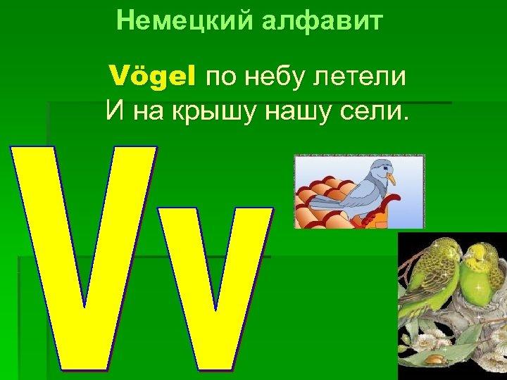 Немецкий алфавит Vögel по небу летели И на крышу нашу сели.