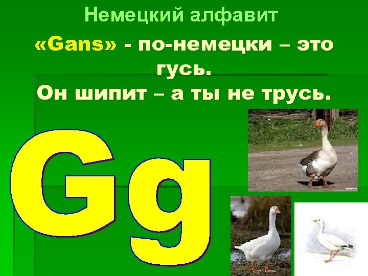 Немецкий алфавит «Gans» - по-немецки – это гусь. Он шипит – а ты не