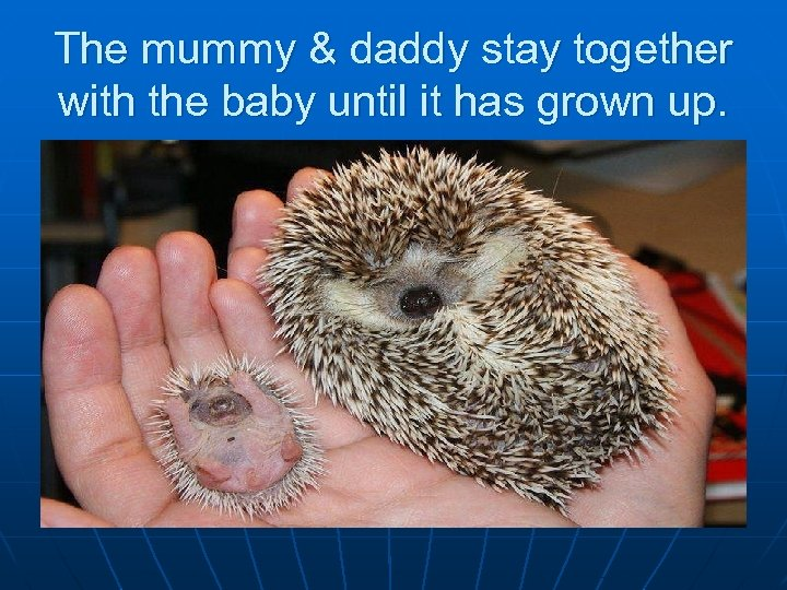 The mummy & daddy stay together with the baby until it has grown up.