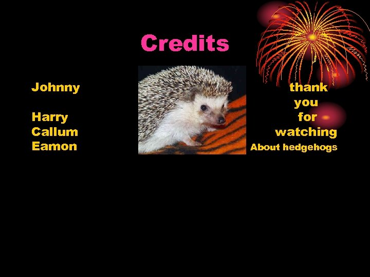 Credits Johnny Harry Callum Eamon thank you for watching About hedgehogs