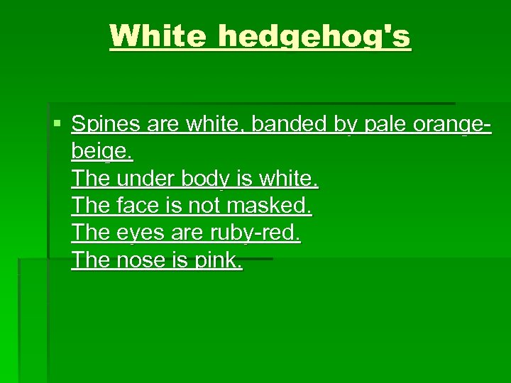 White hedgehog's § Spines are white, banded by pale orangebeige. The under body is