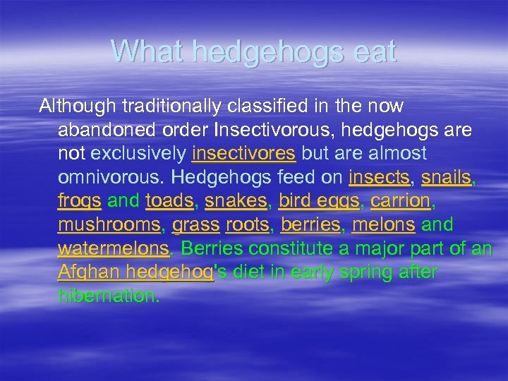 What hedgehogs eat Although traditionally classified in the now abandoned order Insectivorous, hedgehogs are