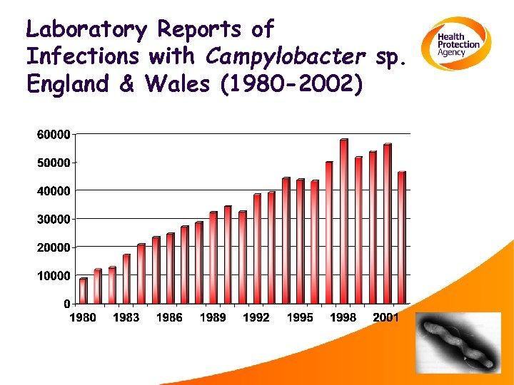 Laboratory Reports of Infections with Campylobacter sp. England & Wales (1980 -2002)