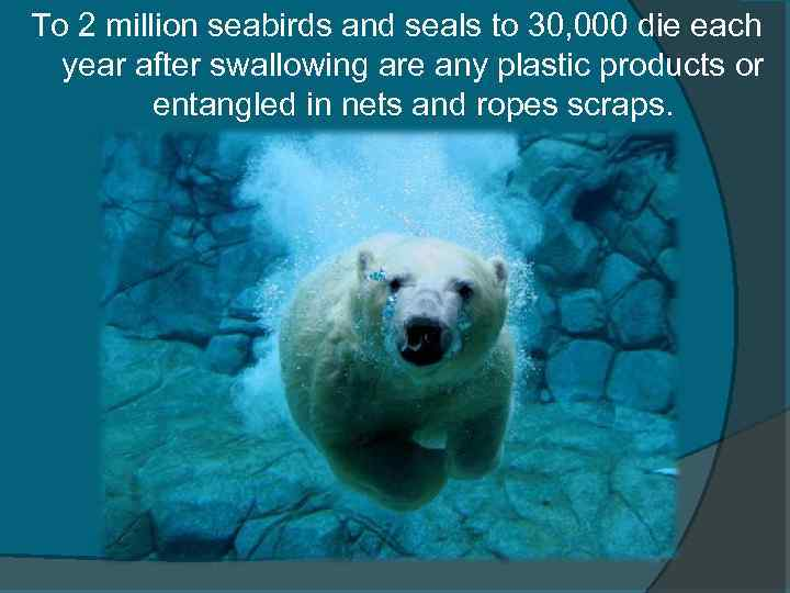 To 2 million seabirds and seals to 30, 000 die each year after swallowing