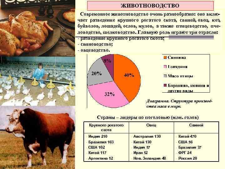ЖИВОТНОВОДСТВО Современное животноводство очень разнообразно: оно включает разведение крупного рогатого скота, свиней, овец, коз,
