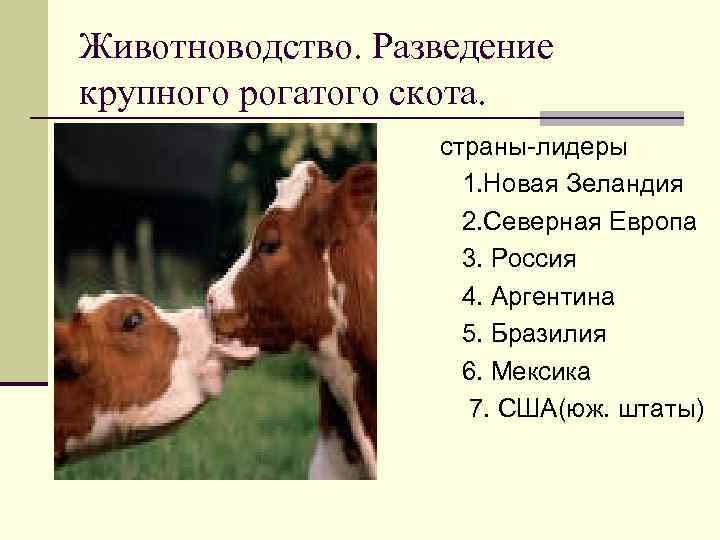 Животноводство. Разведение крупного рогатого скота. n n n n страны-лидеры 1. Новая Зеландия 2.