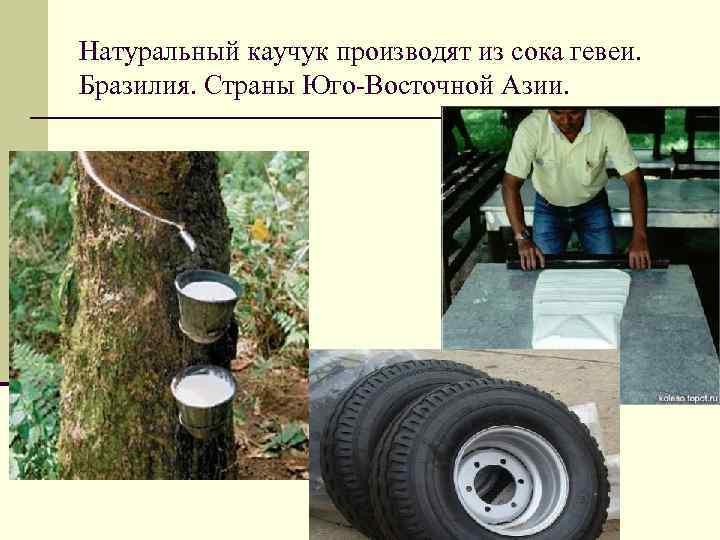 Натуральный каучук производят из сока гевеи. Бразилия. Страны Юго-Восточной Азии.