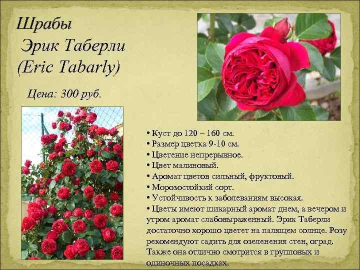 Шрабы Эрик Таберли (Eric Tabarly) Цена: 300 руб. • Куст до 120 – 160