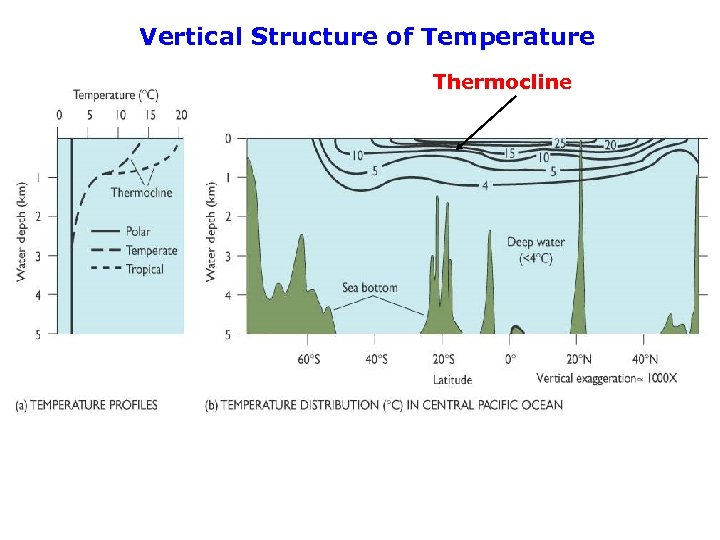 Vertical Structure of Temperature Thermocline