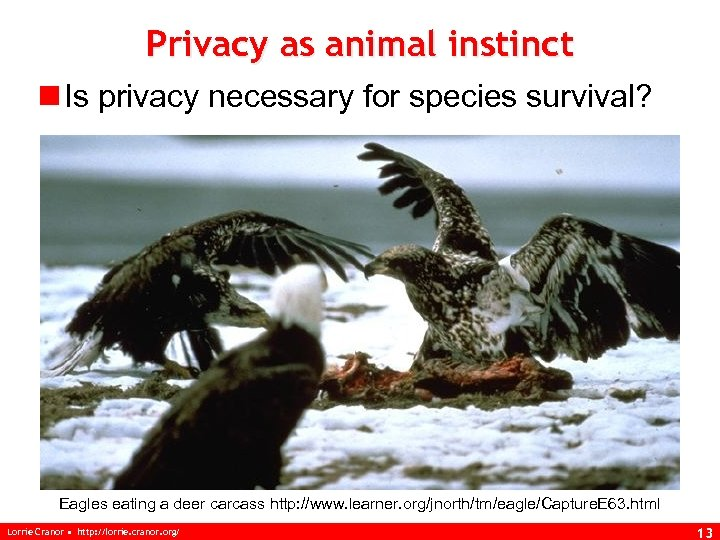 Privacy as animal instinct n Is privacy necessary for species survival? Eagles eating a