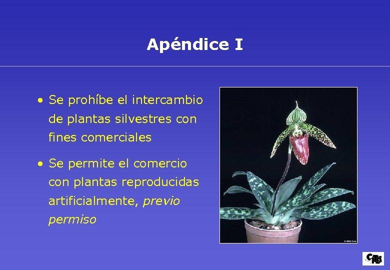 Apéndice I • Se prohíbe el intercambio de plantas silvestres con fines comerciales •