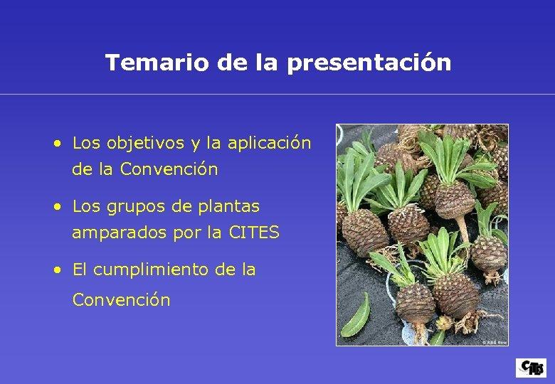 Temario de la presentación • Los objetivos y la aplicación de la Convención •