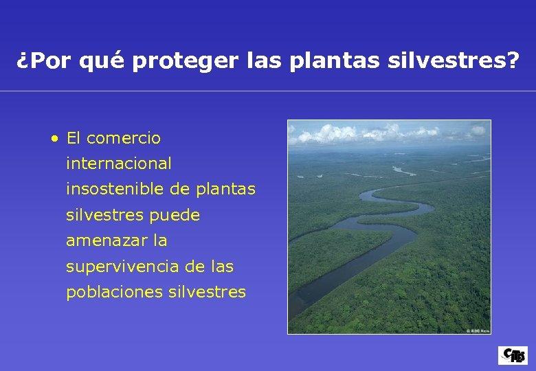 ¿Por qué proteger las plantas silvestres? • El comercio internacional insostenible de plantas silvestres