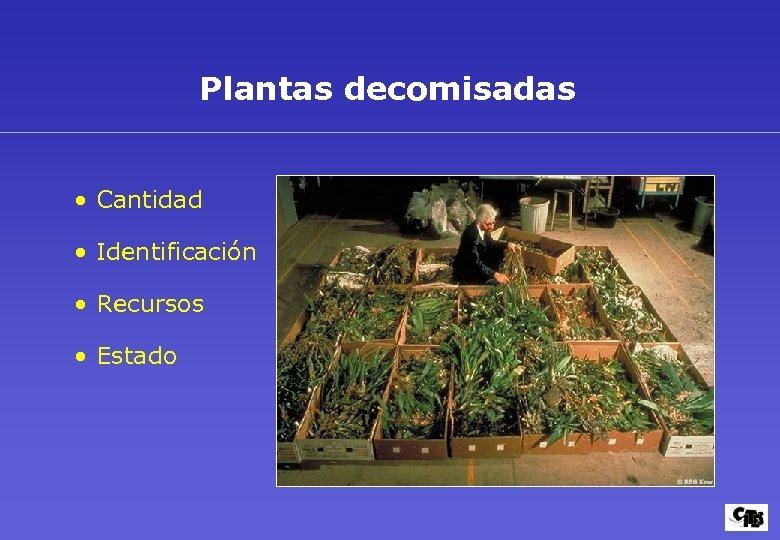 Plantas decomisadas • Cantidad • Identificación • Recursos • Estado