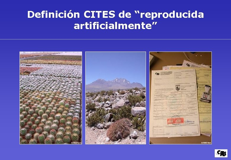 "Definición CITES de ""reproducida artificialmente"""