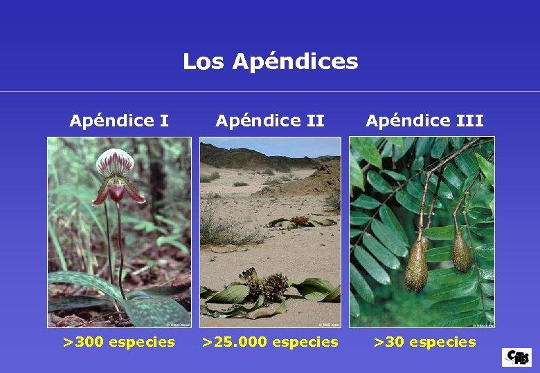 Los Apéndice III >300 especies >25. 000 especies >30 especies